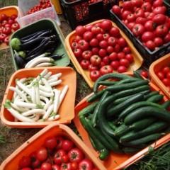 7月の収穫祭で使う野菜たち