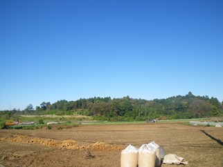 冬が始まる頃の畑